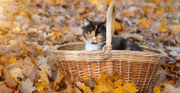 Katze im korb. katze sitzt in einem korb und herbstlaub