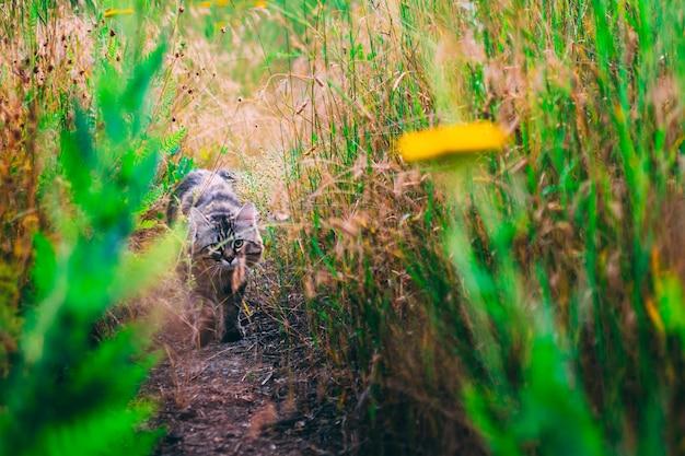 Katze in den blumen auf dem grünen gras