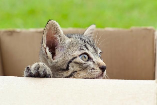 Katze in der pappschachtel auf grünem hintergrund