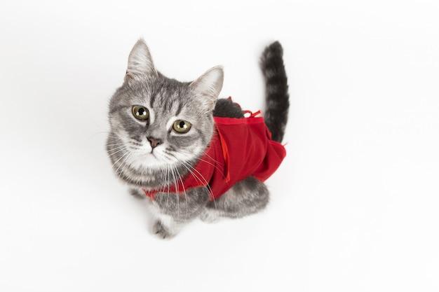 Katze in roter medizinischer decke für katzen, isolat auf weiß