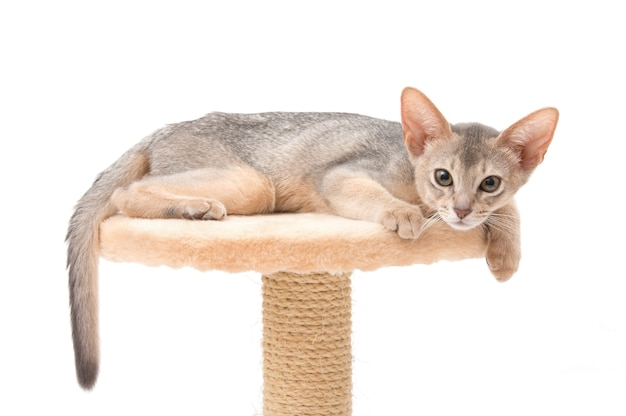 Katze isoliert