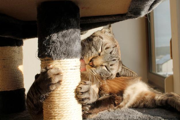 Katze kratzt und leckt den baum