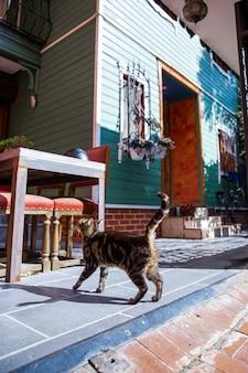 Katze mit eingang in ein wohngebäude mit blumen auf fenstern, treppen und geparktem fahrrad in istanbul, türkei