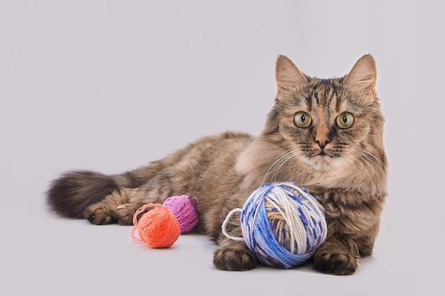 Katze mit fäden auf weiß isoliert