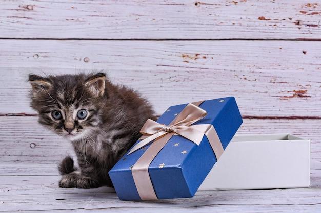 Katze mit geschenkbox