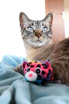 Katze mit mäusespielzeug