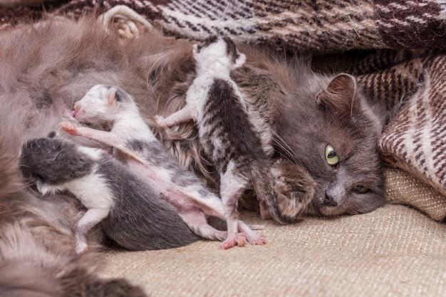 Katze mit neugeborenen kätzchen, katze füttert kätzchen
