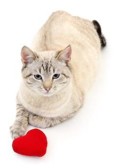 Katze mit rotem valentinstagherz auf weiß