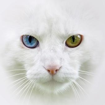 Katze mit verschiedenen überraschungen farbiges augenporträt