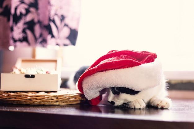 Katze mit weihnachtsmütze. neues jahr und weihnachtskonzept