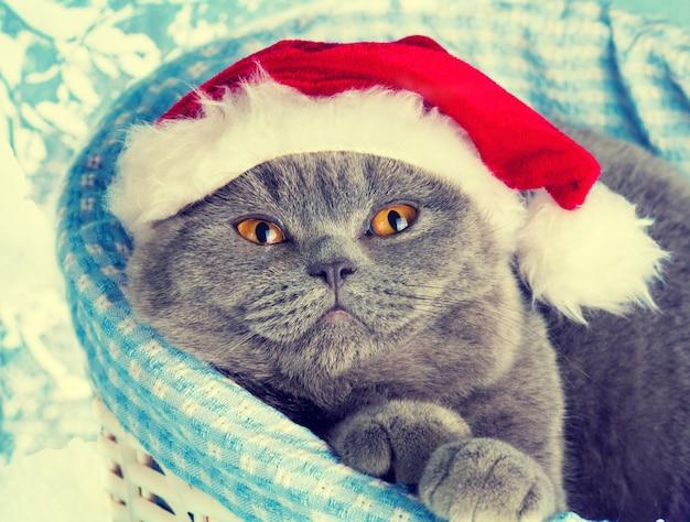 Katze mit weihnachtsmütze träumt in einem korb