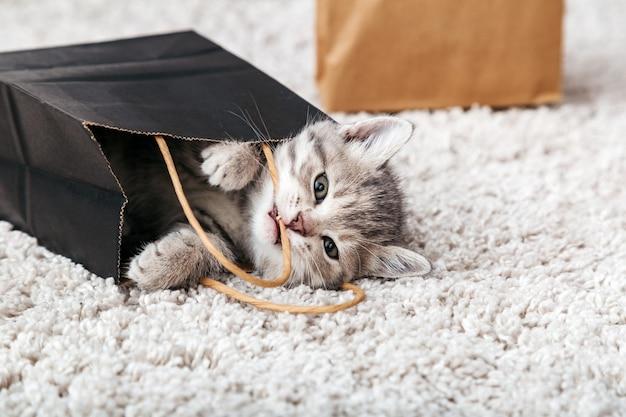 Katze nagt verderbt liefertasche zu hause. entzückendes kleines tabbykätzchen versteckt sich in einer papiereinkaufstasche. geschenk zum valentinstag kätzchen in paketüberraschung. verkauf kaufkonzept.
