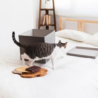 Katze nahe schokolade und kasten auf bett