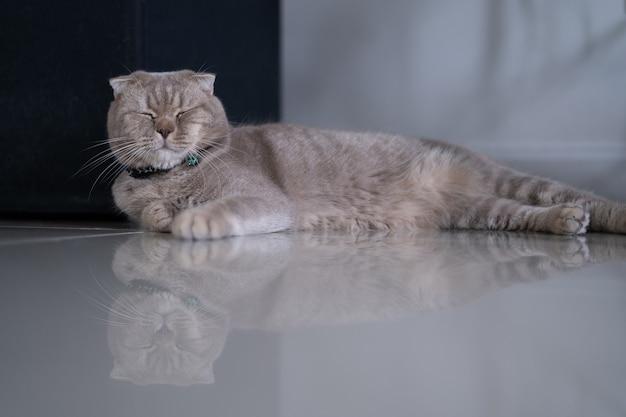 Katze nette kleine katze, die auf sofa an meinem perfekten traum meiner heimatkatze schläft