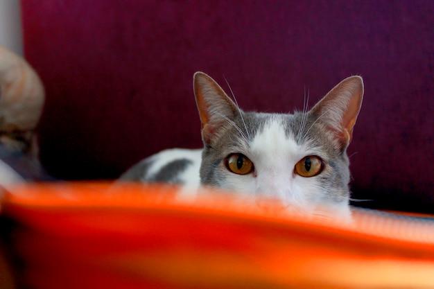 Katze neugierig