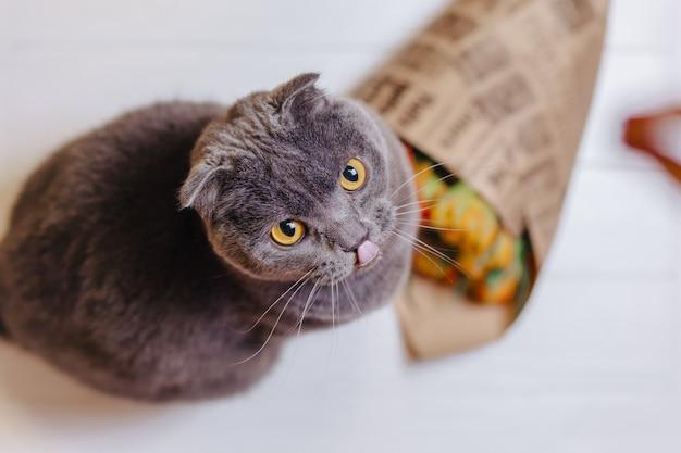 Katze schaut auf hintergrund sitzend auf blumen