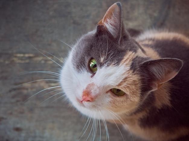 Katze schaut auf