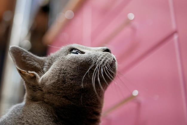 Katze schaut mit der hoffnung auf, nahrung vom küchentisch holen zu wollen, ansicht von unten.