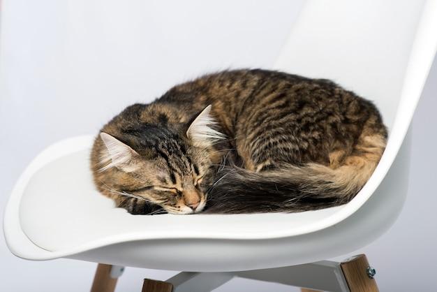 Katze schläft auf einem stuhl auf einer hellen hintergrundnahaufnahme