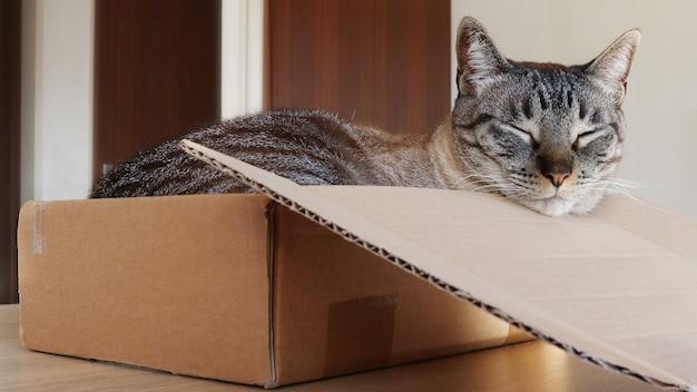 Katze schläft in einem karton auf einem holztisch
