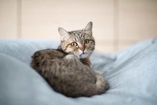 Katze schlafen auf dem bett