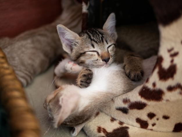 Katze schlafen bequem im bett