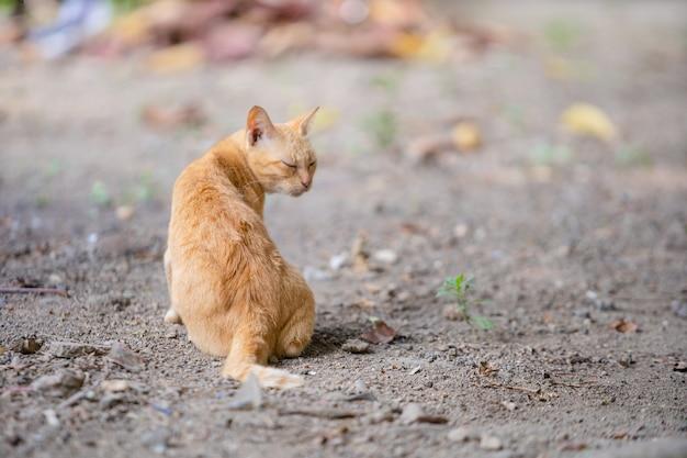 Katze setzt sich auf den boden