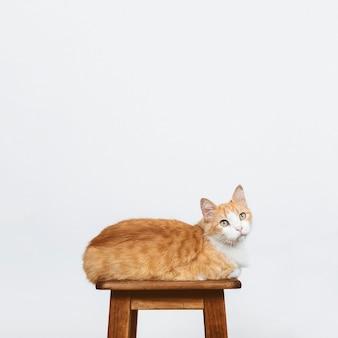 Katze sitzt auf einem stuhl