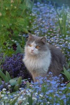 Katze sitzt in einem sommergarten zwischen blauen blumen