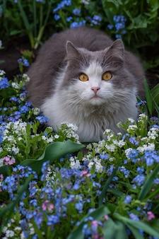 Katze sitzt in einem sommergarten zwischen blauen vergissmeinnicht-blumen. vergiss mich nicht blumen und katze im garten