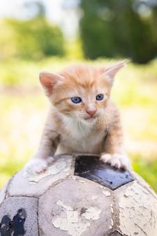 Katze spielt ball