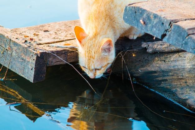 Katze spielt die waterfront Premium Fotos