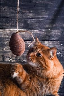 Katze spielt mit einem spielzeug