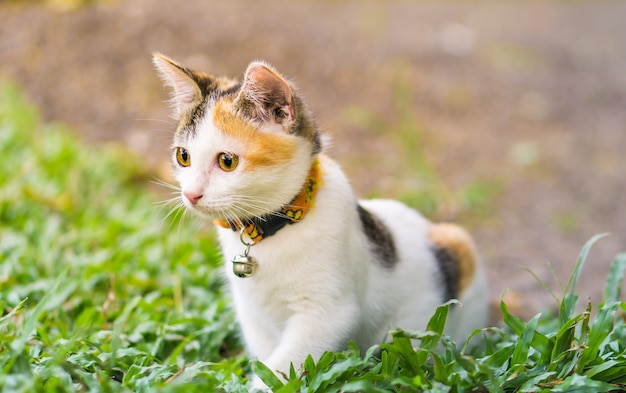Katze thai