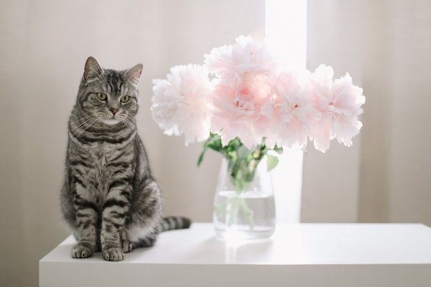 Katze und blumen in einem sonnigen raum
