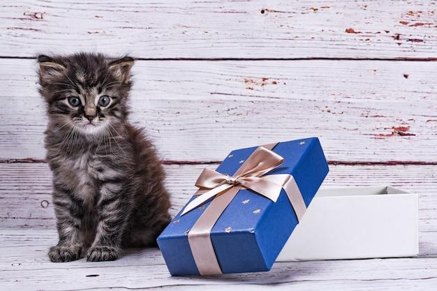 Katze und geschenkbox