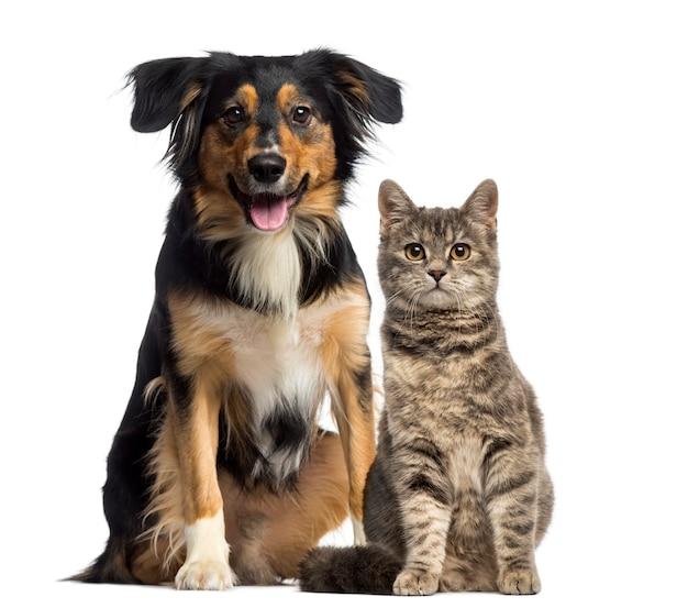 Katze und hund sitzen zusammen