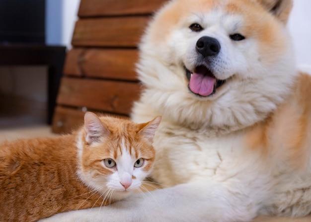 Katze und hund zusammen auf dem innenboden