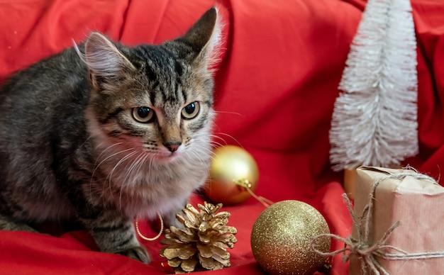 Katze und verpackte geschenke in der hand auf einem weihnachtsbaum mit exemplar. weihnachtsgeschenkbox