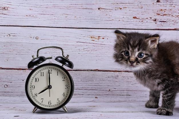 Katze und wecker