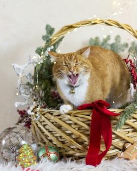 Katze und weihnachtsferien weihnachtsdeko