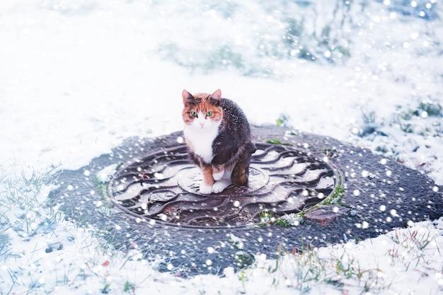 Katze unter einem schneefallwinter
