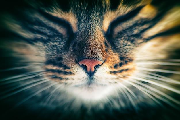 Katze vorne