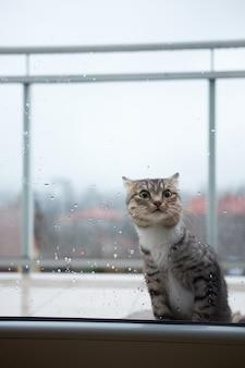 Katze wird außerhalb des fensters auf einem balkon wegen des kalten regenwetters kalt und bittet, hineinzukommen.
