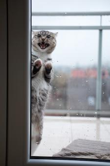 Katze wird außerhalb des fensters wegen des kalten regenwetters kalt und bettelt darum, hineinzukommen.