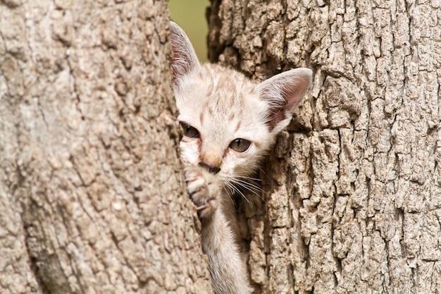 Katzen, die niedlich aussehen und gesten machen