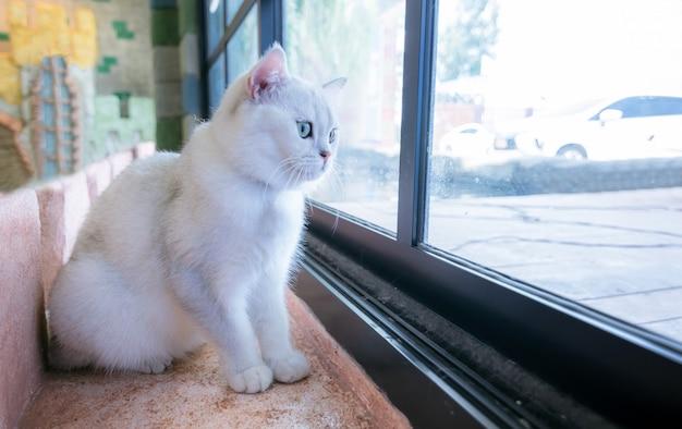 Katzen einsam in einem schönen raum und süße flauschige katzen