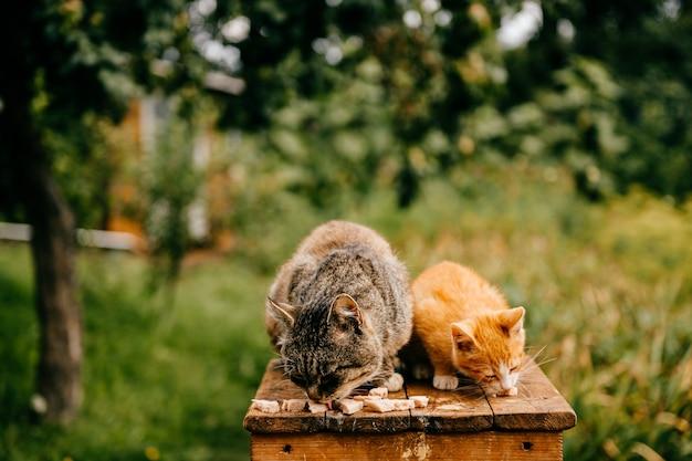 Katzen essen im garten
