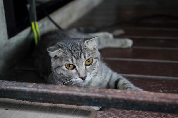 Katzen suchen nach opfern.