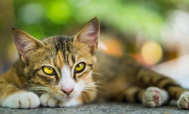 Katzen suchen.